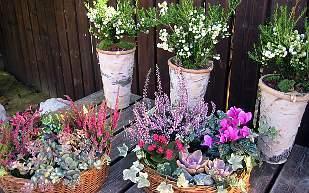 blommor som tål frost på våren