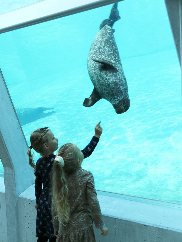 Sälarna på Nordsøen Oceanarium kan upplevas både över och under ytan.