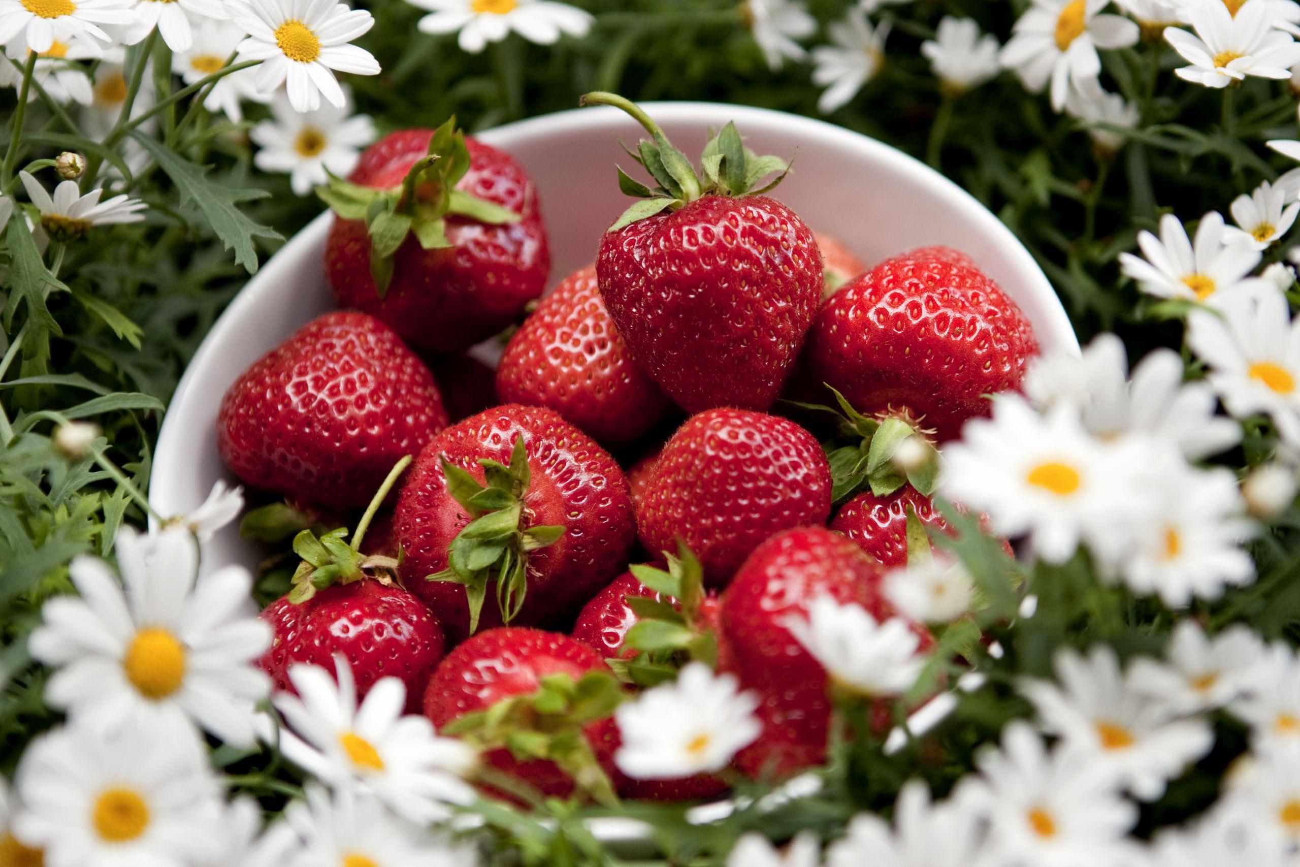 Så mycket jordgubbar finns det i midsommar | GP