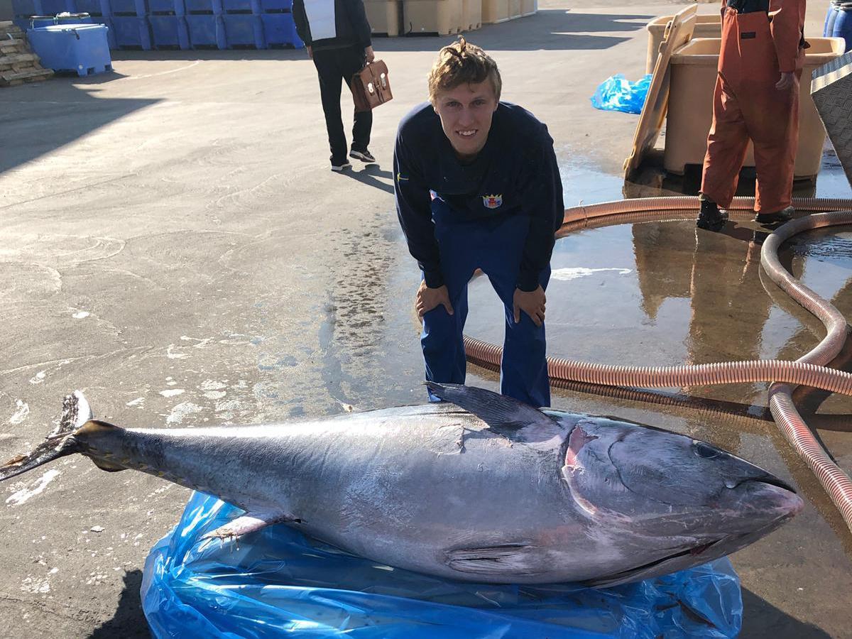 hur stor är en tonfisk