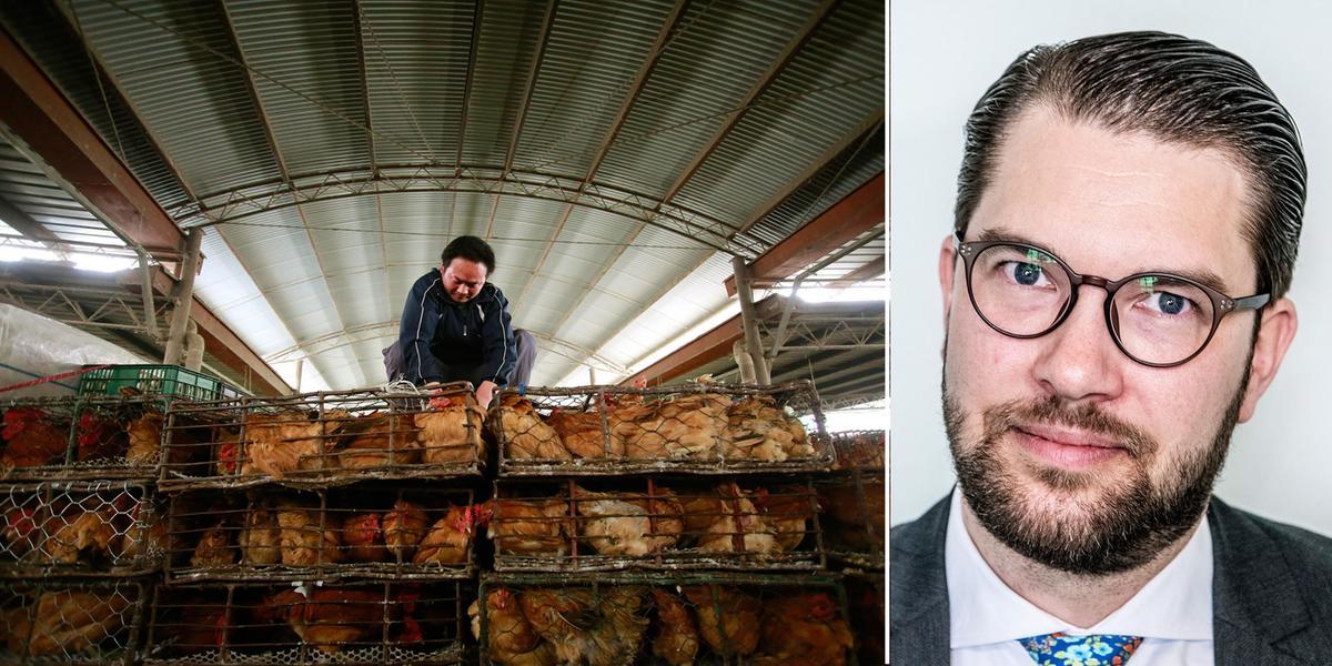 DEBATT; Kina måste stänga de farliga djurmarknaderna omedelbart