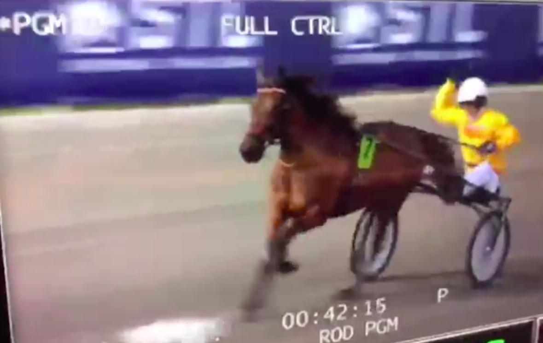 Häst slogs på uppvärmningen – ströks från V75