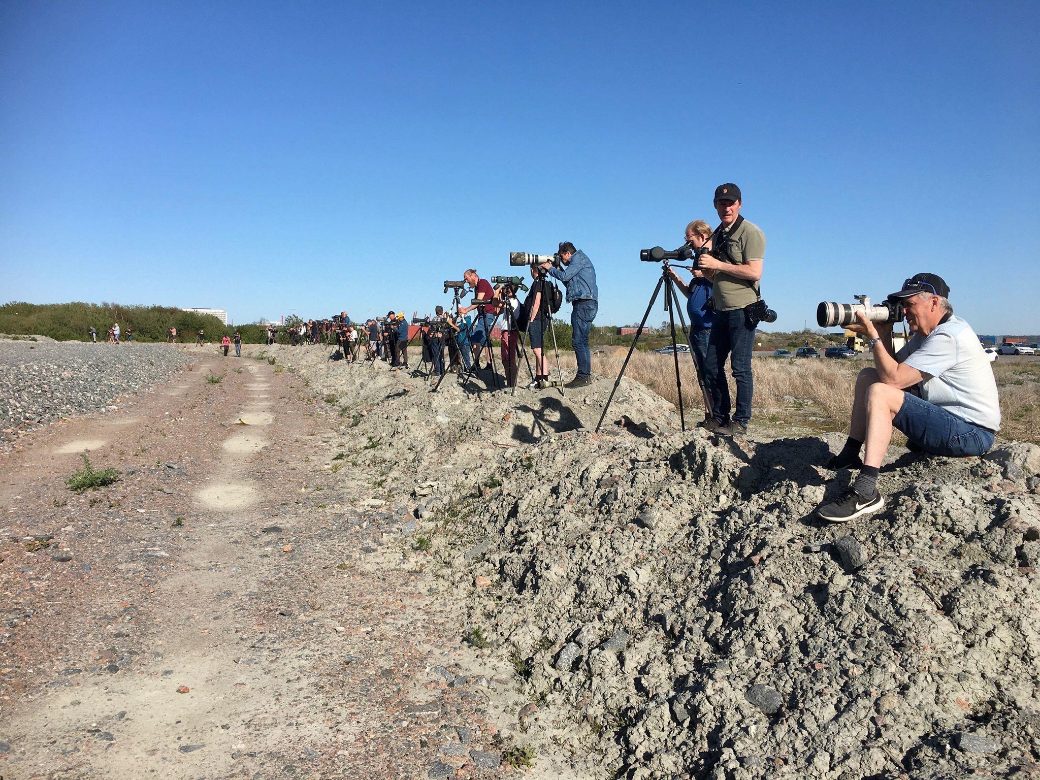 Sällsynt fågelart i Torslanda skapar historia