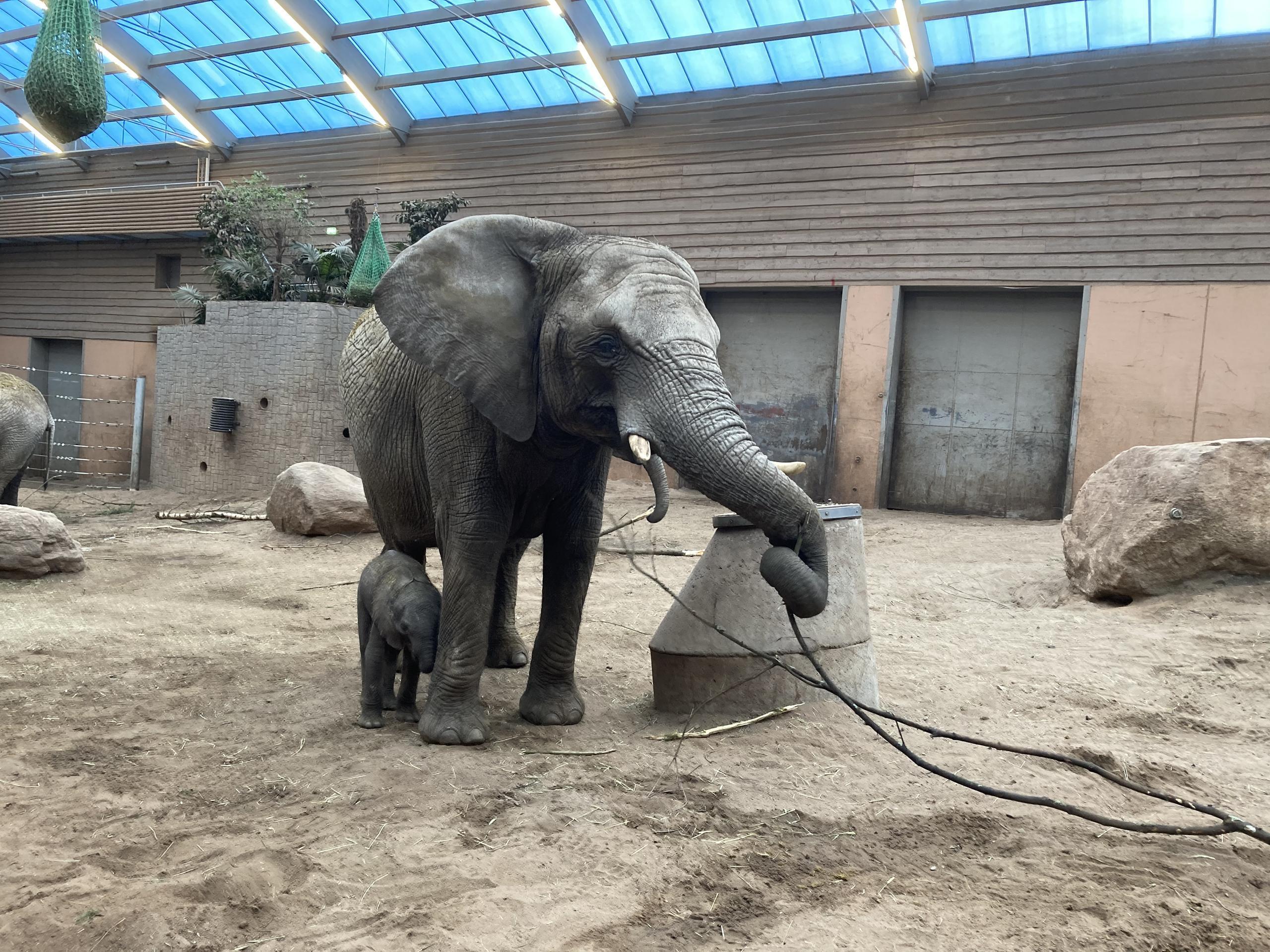 Djurparken får stort stöd efter elefantungens död