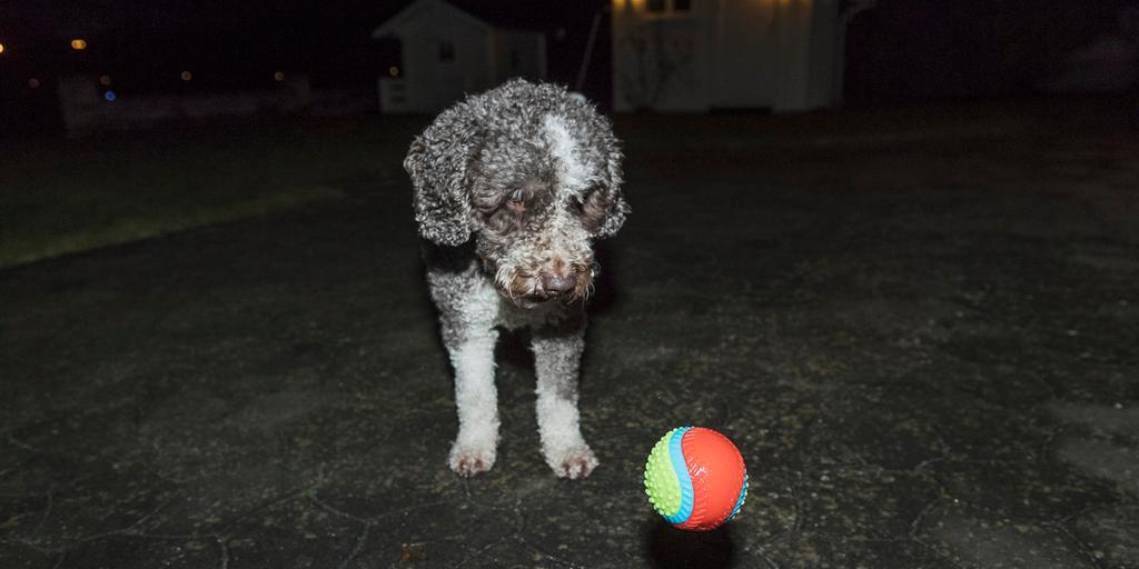 Hundar utan hem sverige