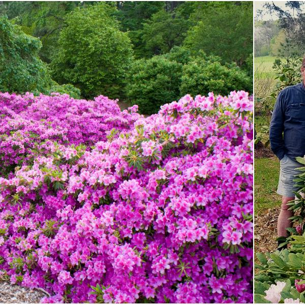 collage-rhododendron.jpg